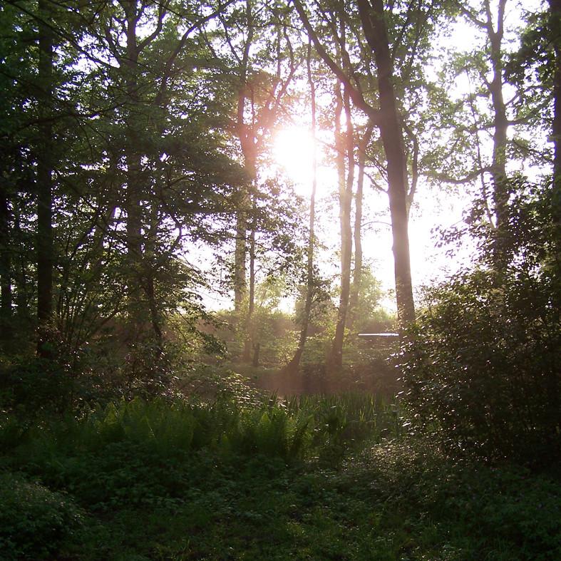 Waldidylle nach Regenschauer