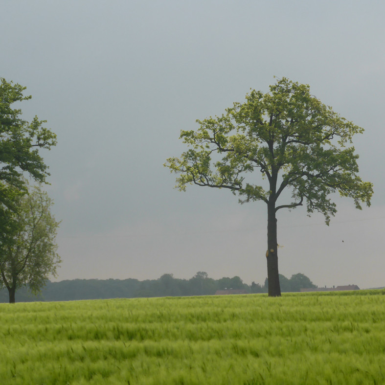 Urlaub im Münsterland