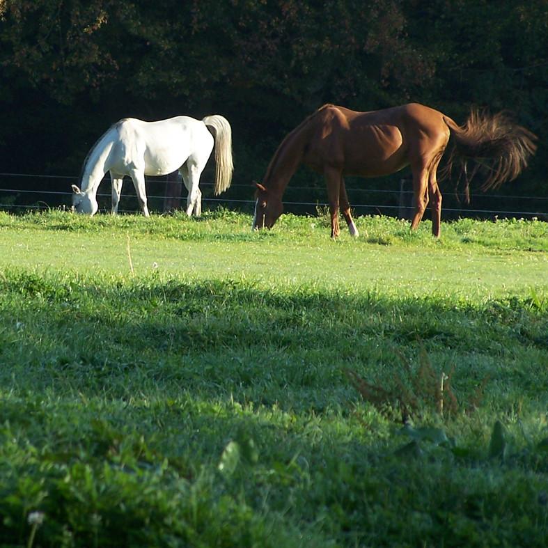 Ponyhof Georgenbruch