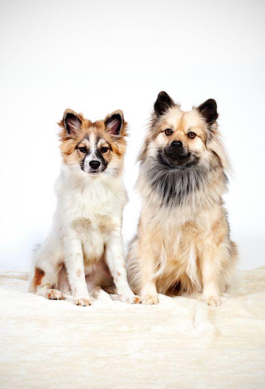 Bella & Daisy