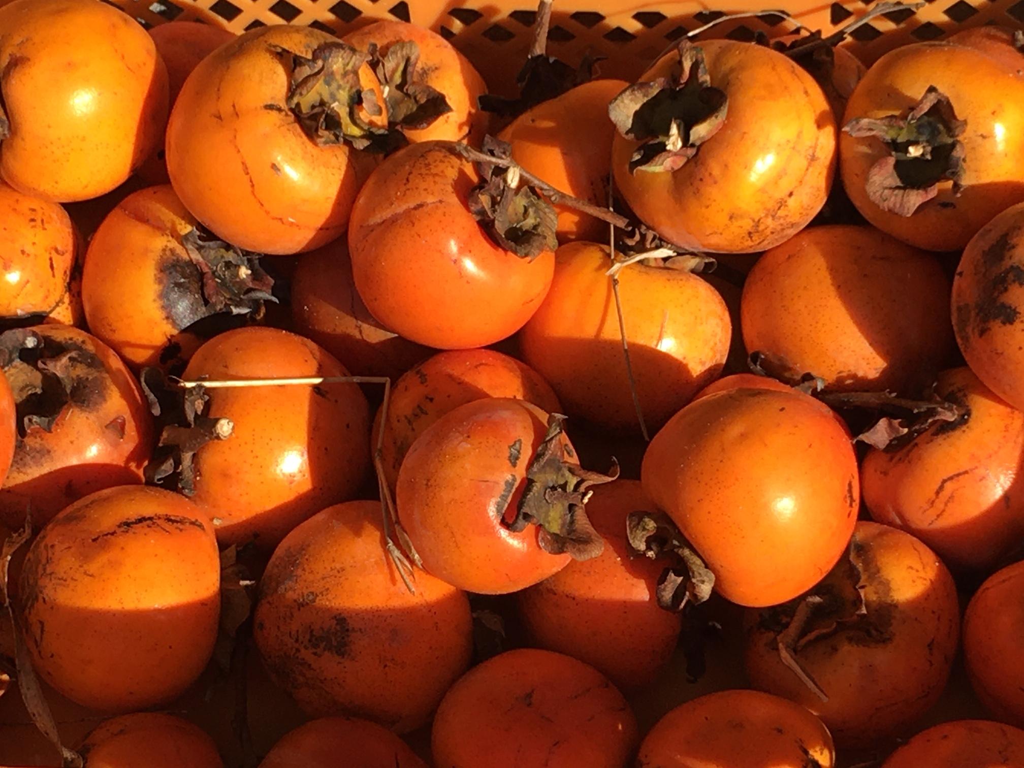 秋の恵み:柿