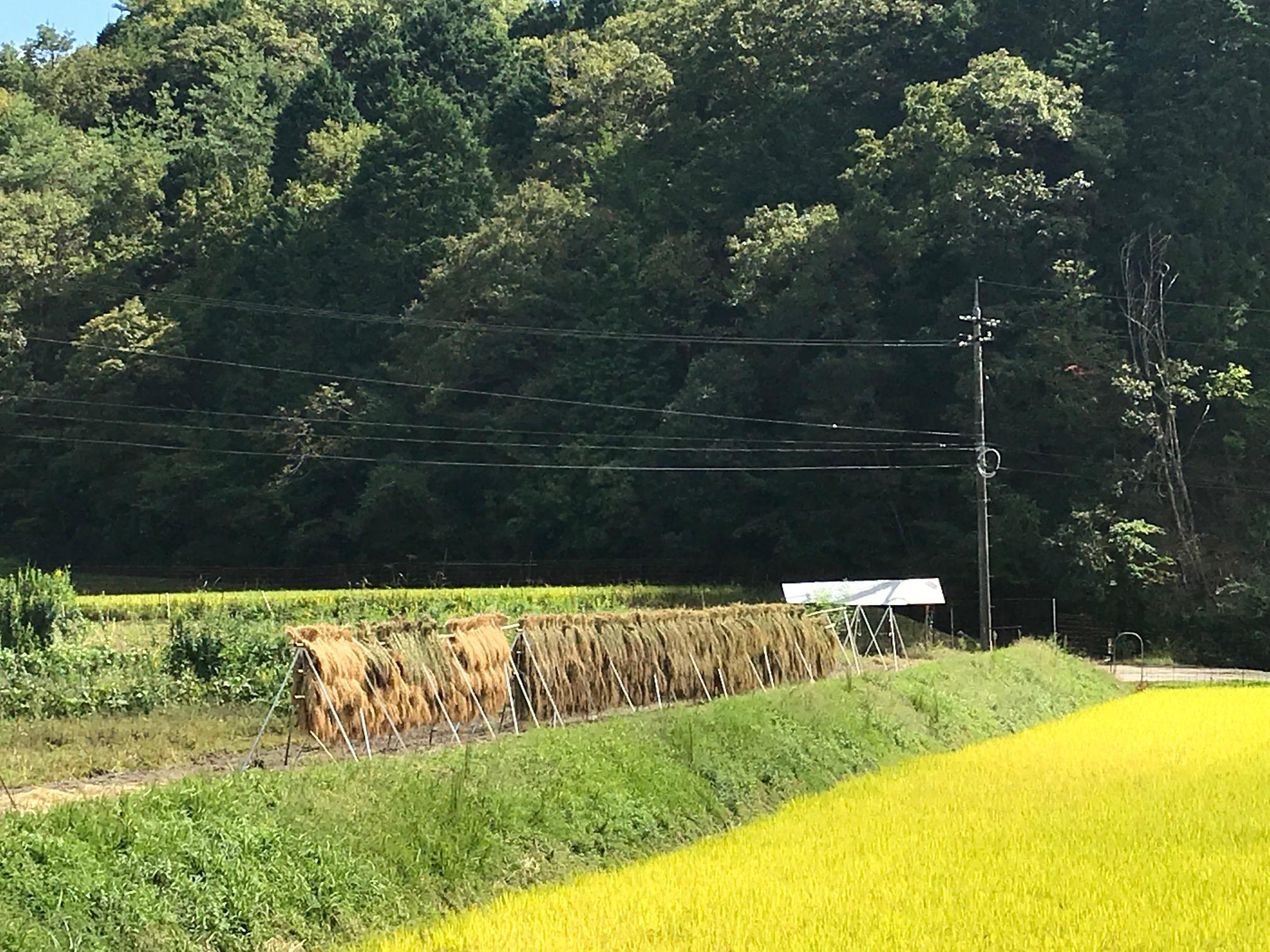 静耕舎目の前の農耕地