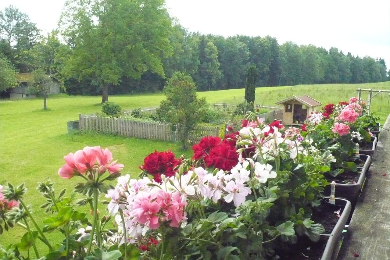 Blick vom Balkon auf den Bauerngarten