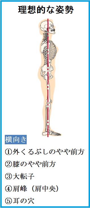かぶらぎ整骨院・整体院ブログ 理想的な姿勢イメージ