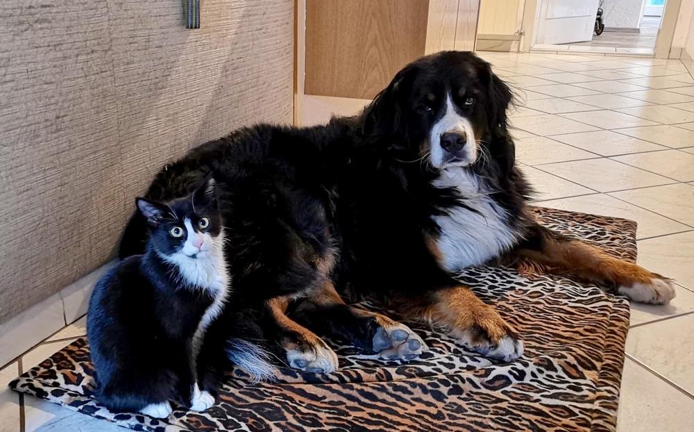 Im neuen Heim mit Hundefreundin Frieda