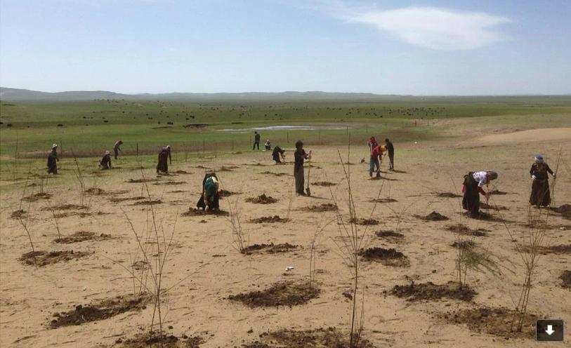 DPE 100  Le Sahara algérien (2014) au début de la plantation