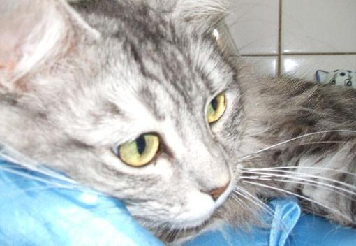 Voici ma merveilleuse petite Tootsie. Elle avait à peine deux mois lorsqu'elle a été trouvée dans une poubelle à Paris, à l'intérieur d'une boîte de chaussures