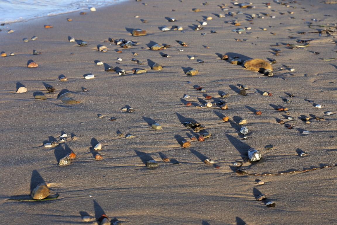Sandstrand mit Steinen | Timmendorfer Strand