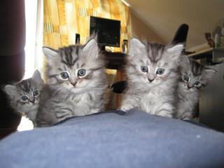 Von links nach rechts: Mikesch, Jinx, Sirius und Towarischtsch