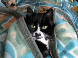 Liebes Praxis-Team,  ein ganz dolles Danke-Miau von Eurer Mina für die sehr gute tierärztliche Betreuung. So kann ich meinen Katzensenioren Lebensabend in vollen Zügen geniessen.  Tierisch herzliche Grüße  Mina und Ines Lasczka (das ist mein Dosi)