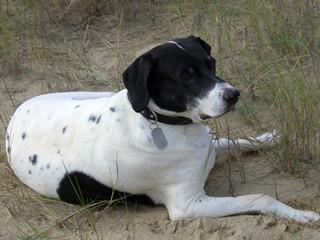 Liebes Praxisteam,  auf diesem Wege möchte ich mich nochmals herzlich bedanken, dass Sie meinen Hund Pedro und mich, beim Abschied nehmen so einfühlsam begleitet haben. Es ist schön zu wissen, dass es so liebevolle Menschen gibt.   Lieben Gruss  Birgit Kr