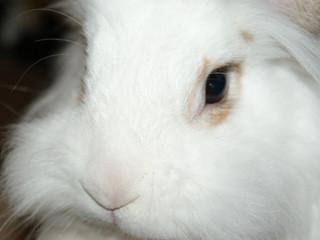 Eine sehr kompetente Kaninchenberatung. Merlin, meine anderen Tiere und ich, wir fühlen uns immer sehr gut aufgehoben!  Lieben Gruß Annemarie Savi
