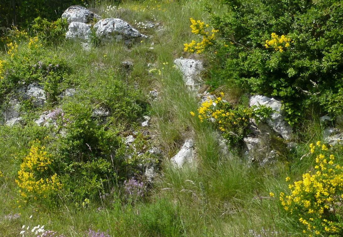 Image du Causse