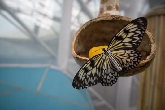 Schmetterlingshaus in Konya