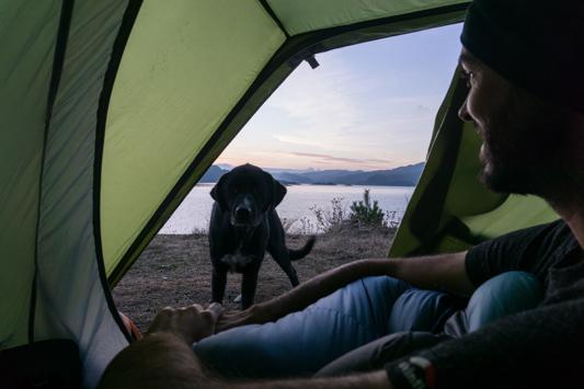 Unsere Wachhündin kontrolliert am Morgen, ob bei uns im Zelt alles ok ist.