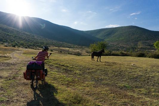 Ein Pferd auf unserer Nachtlager-Weide!