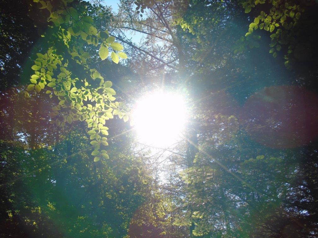 Waldspaziergang am Freitag - 24