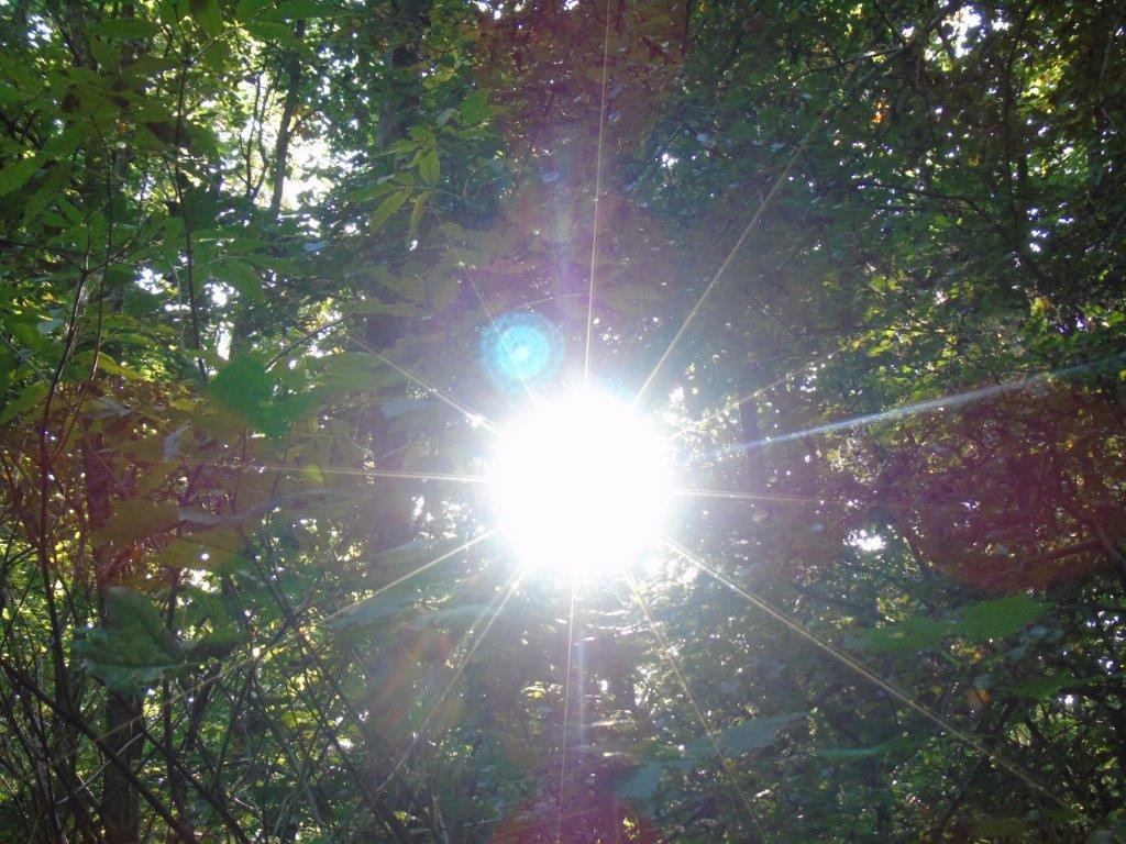Waldspaziergang am Freitag -40
