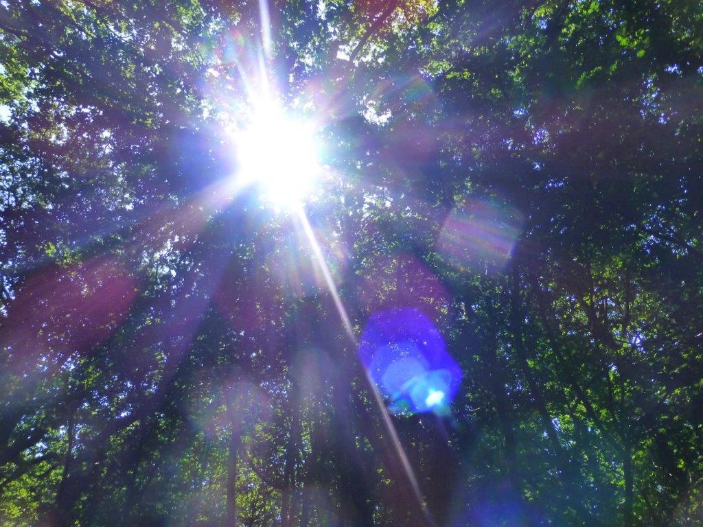 Waldspaziergang am Freitag - 25