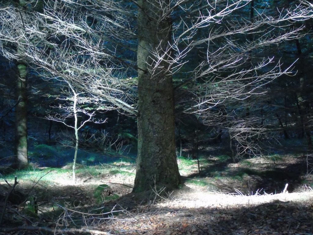 Waldspaziergang am Freitag - 41