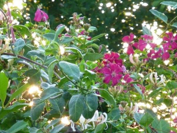 Morgenlichter, Quelle: www.lichtwesenfotografie.com