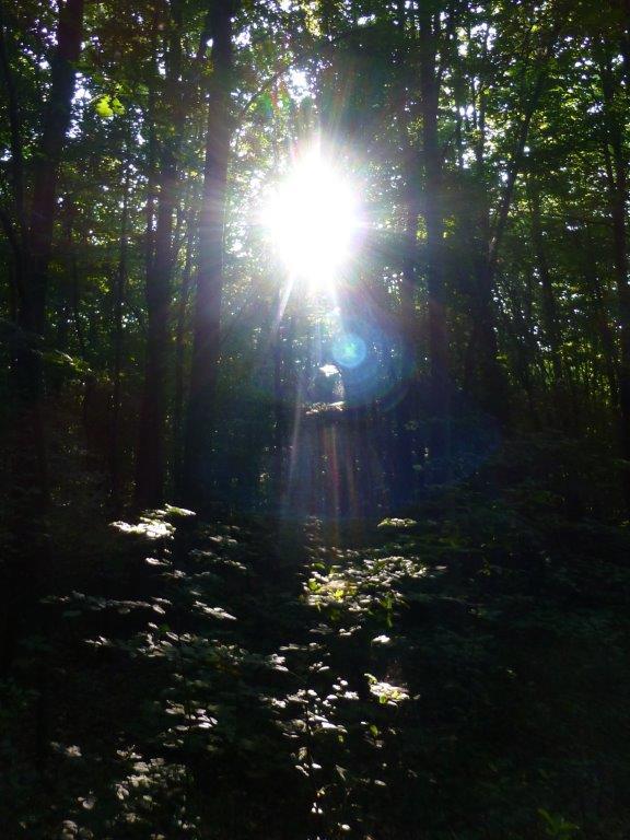 Lichtportal im Wald, Quelle: www.lichtwesenfotografie.com