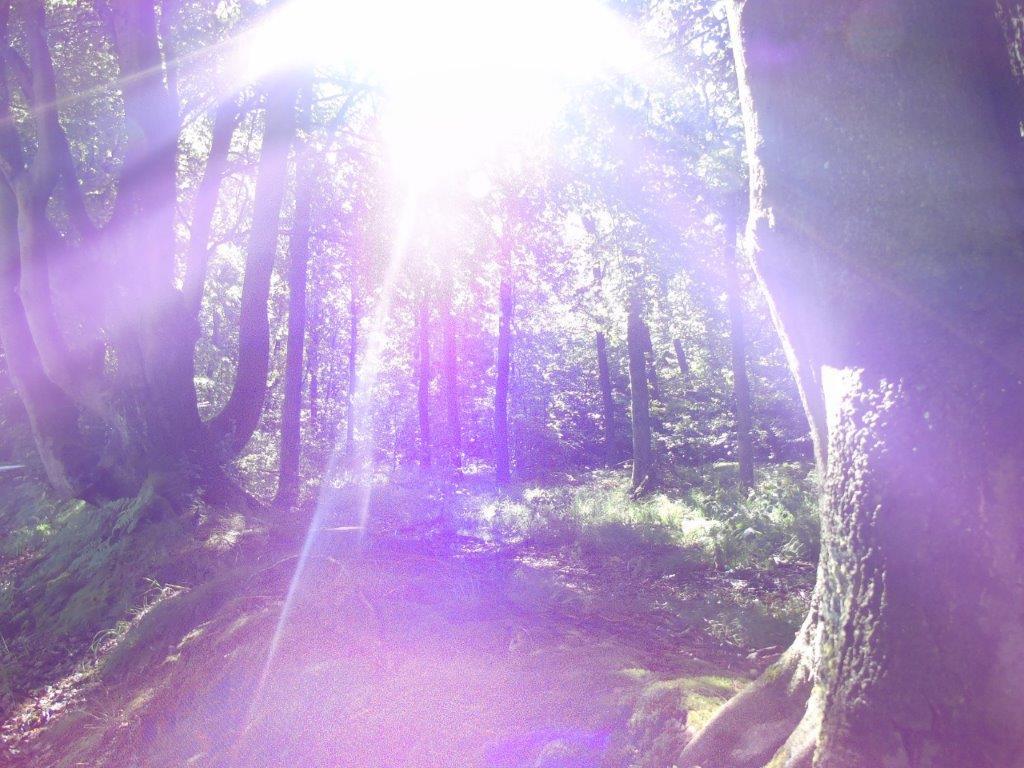 LICHTWESENFOTOGRAFIE: HOCHFREQUENTES LICHT AM 8:8 LÖWE-PORTAL im August