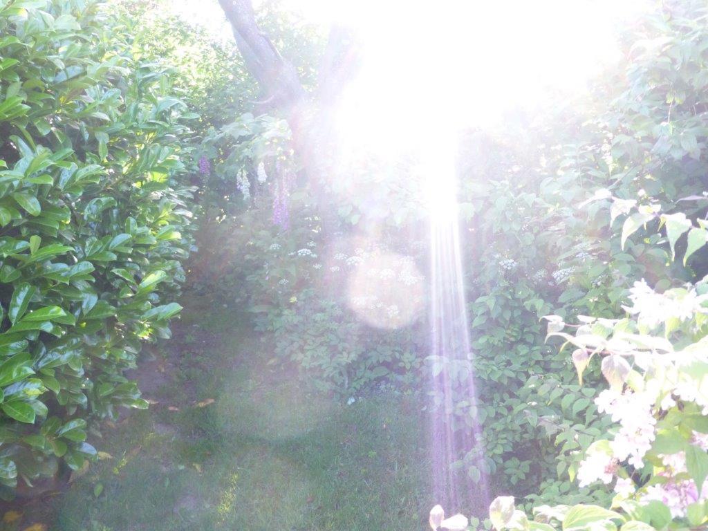 LICHTWESENFOTOGRAFIE: Ein zauberhafter Lichtergruß am Morgen