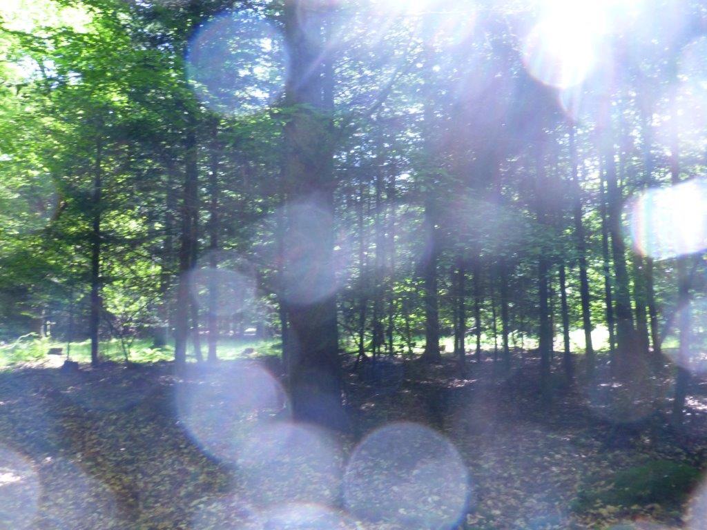 LICHTWESENFOTOGRAFIE: Weiter - Höher - Schneller - LICHT