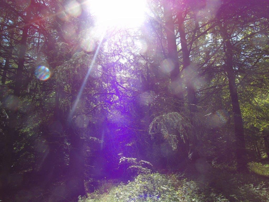 Waldspaziergang am Freitag - 23