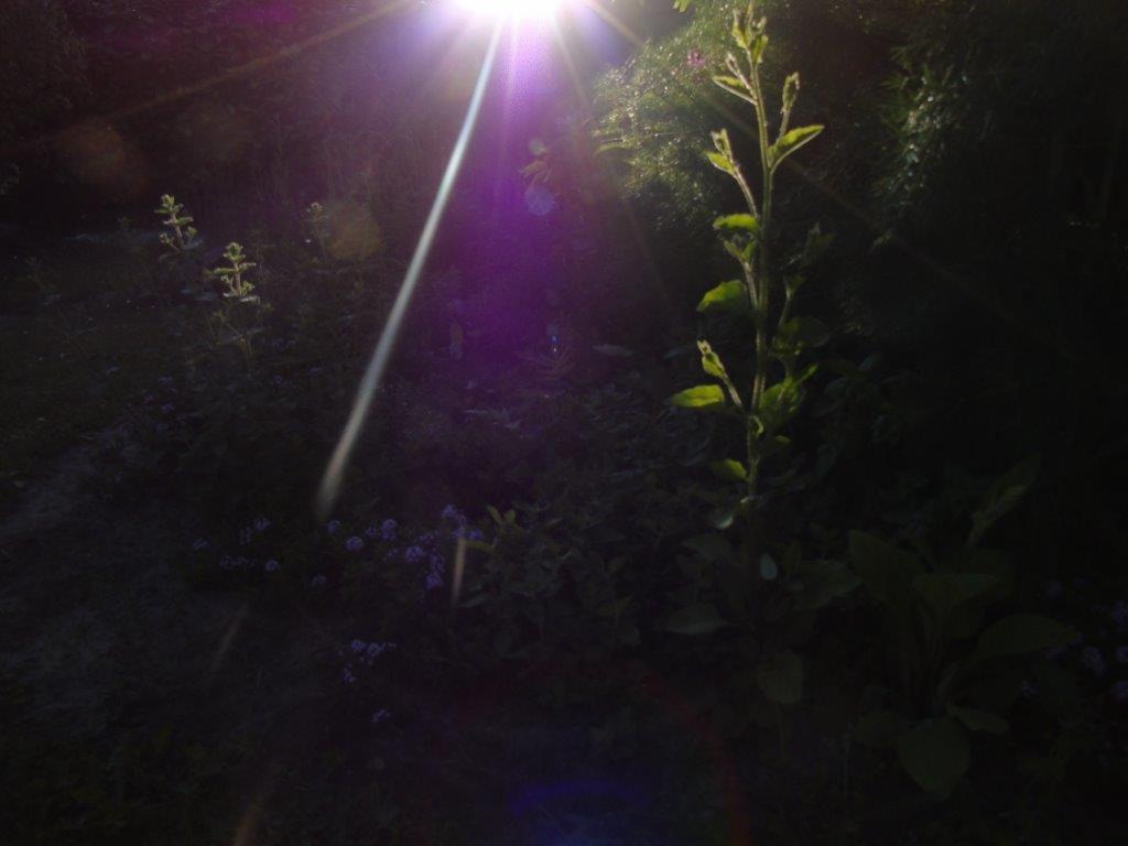 LICHTWESENFOTOGRAFIE: Bilder vom Licht