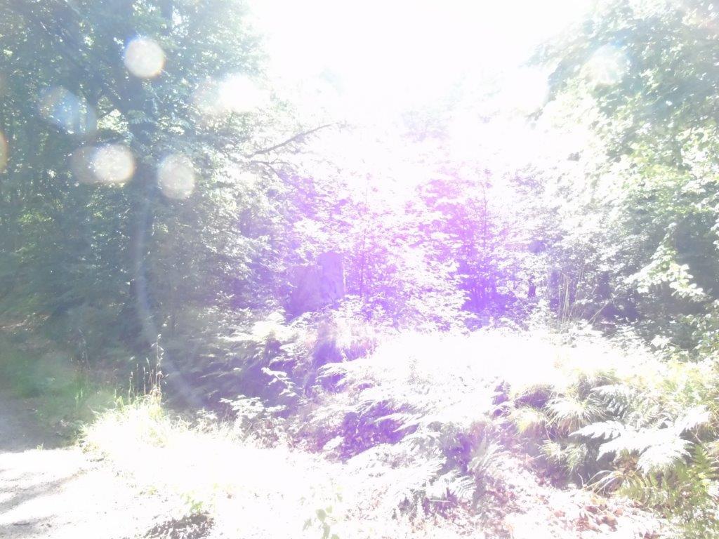 Waldspaziergang am Freitag - 32