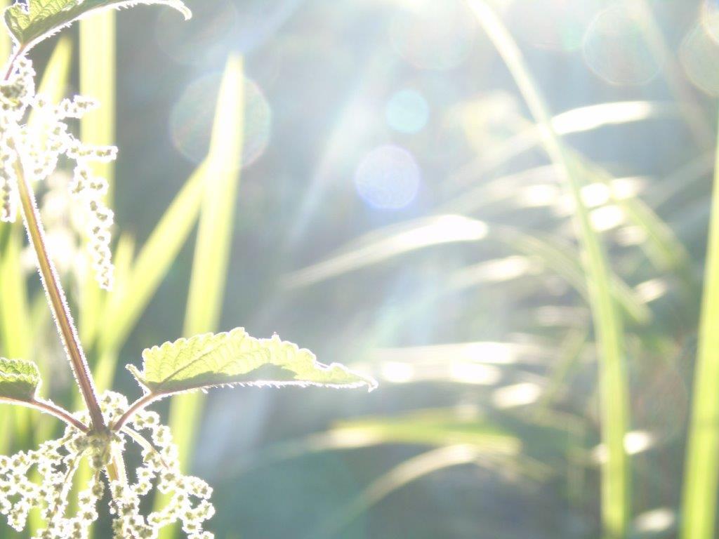 LICHTWESENFOTOGRAFIE: DEIN PARADIES AUF ERDEN - vorstellen - einbilden - ausbilden - abbilden