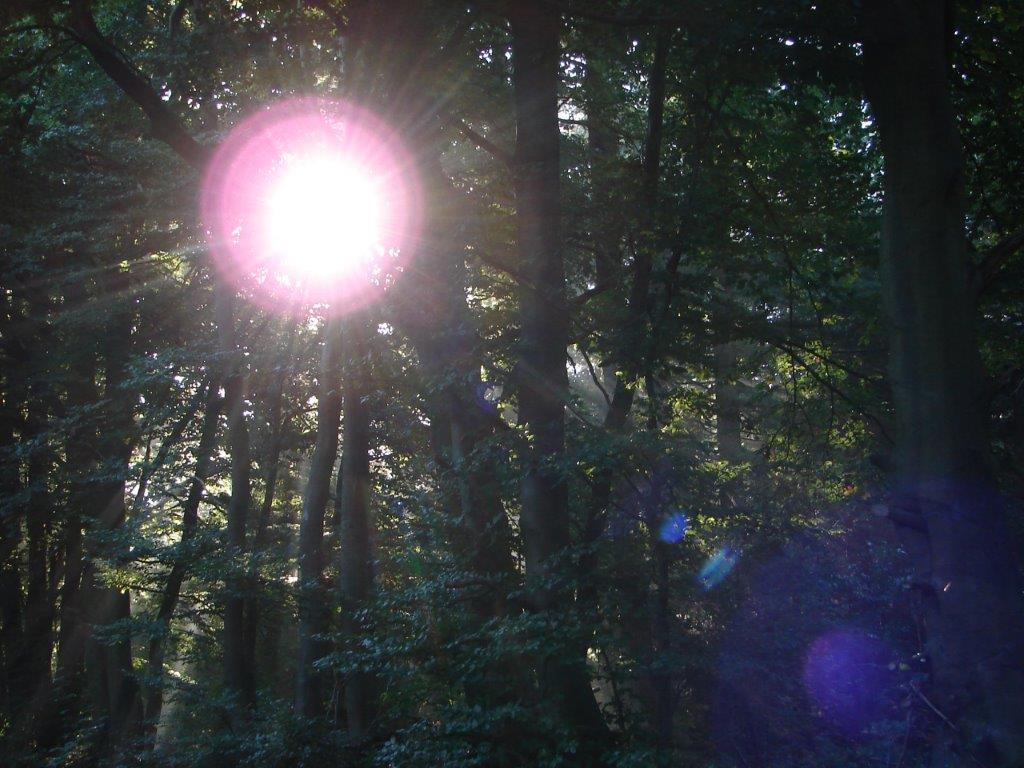 Waldspaziergang am Freitag - 28