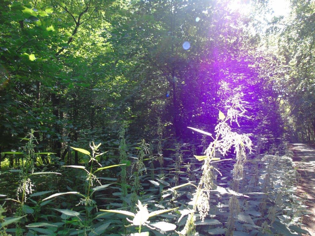Waldspaziergang am Freitag - 30