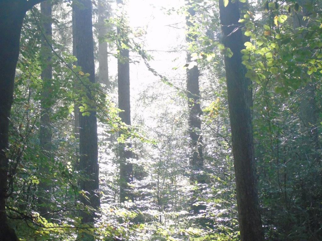 Waldspaziergang am Freitag -42