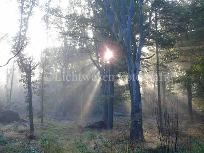 Es werde Licht...und es ward Licht.....