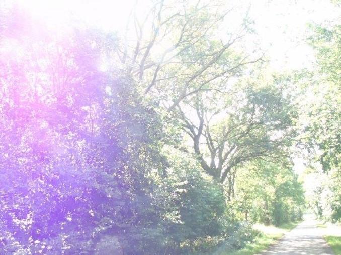 Waldspaziergang am Freitag - 31