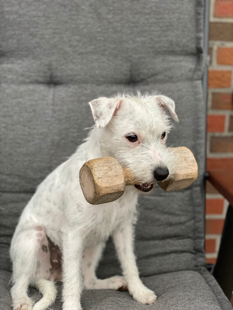 Ava hat die Bauhundprüfung im 1.Preis und 100 Punkte bestanden