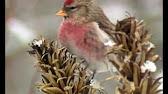 Зимующие птицы леса