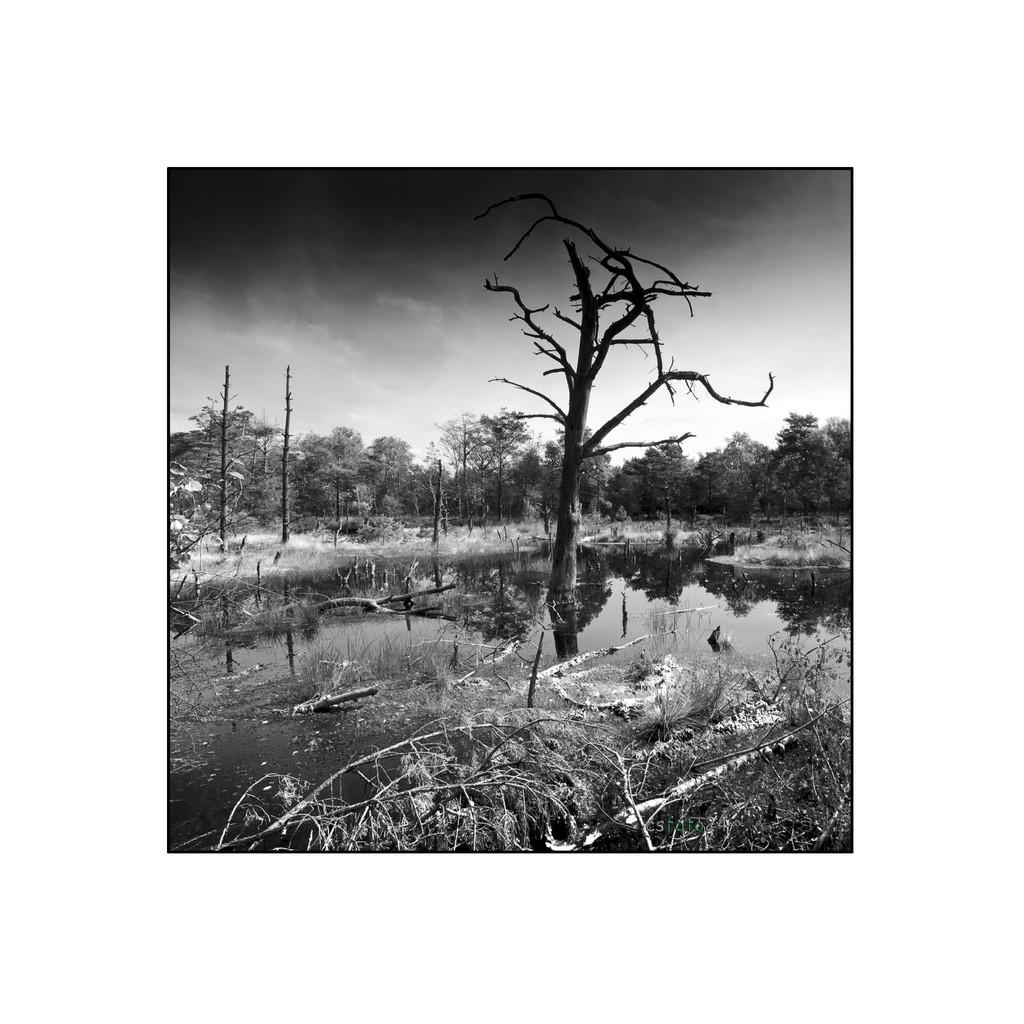 Heide Moor