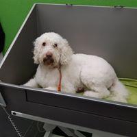 Auch Föhnen in der Badewanne ist möglich, wenn es für den Hund entspannter ist