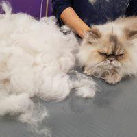 Amira nachher mit viel losgewordener Wolle