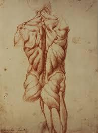 Eine von Michelangelos Anatmiestudien