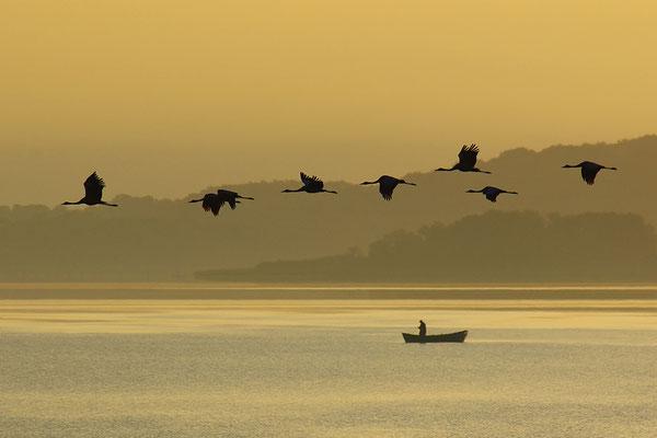 Kraniche im Flug im Morgenlicht (Foto: Achim Schumacher)