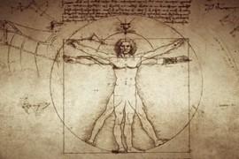 Szkic przedstawia anatomiczny schemat ciała człowieka utorstwa Da Vinci