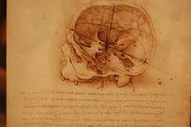 Rehabilitacja Warszawa Bielany, źródło nauki dla fizjoterapeutów i lekarzy - podręcznik anatomii mózgu.