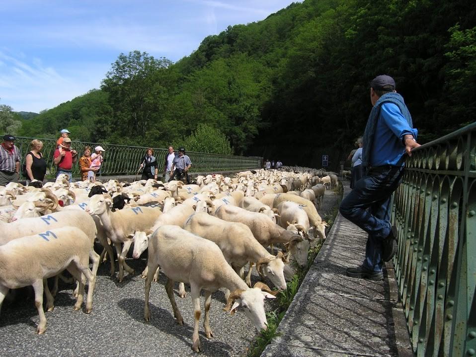 Transhumance en Ariège