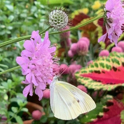 梅雨の晴れ間と夏の花