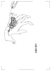 小指の標本